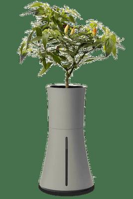 Botanium kruka askgrå